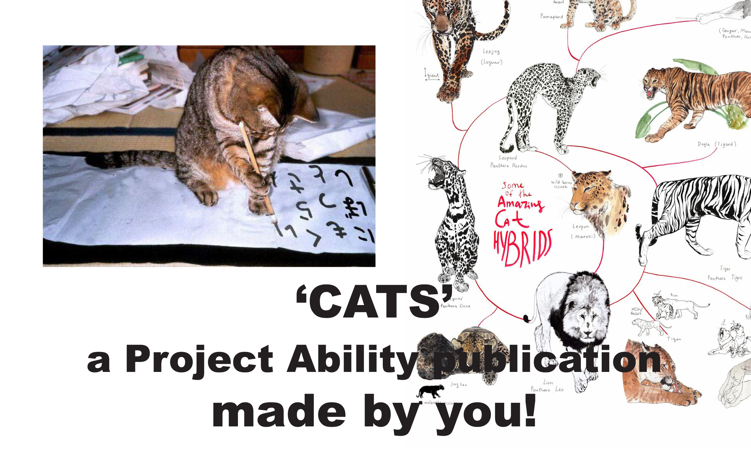 CATS – a series of workshops with Joanna Peace and Luke Shaw