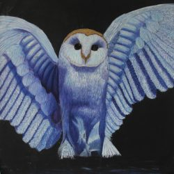 'Owl' by Morag MacGilchrist