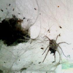 'Spider' by Morag MacGilchrist