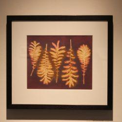 'Midsummer Silverweed' by Celine Mcilmunn