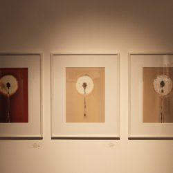 'Allium 1-3' by Celine Mcilmunn