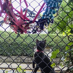 cat looking at colourful woven art on a fence