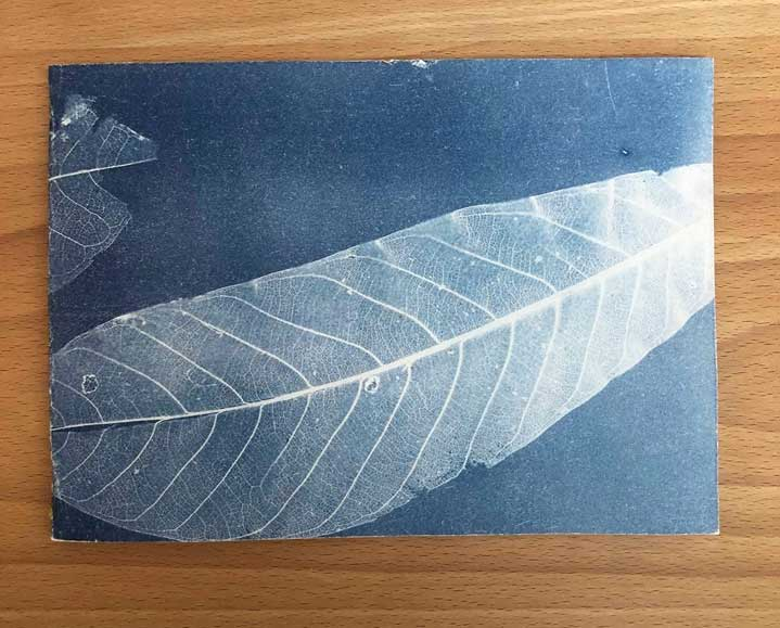 Cyanotype notebook