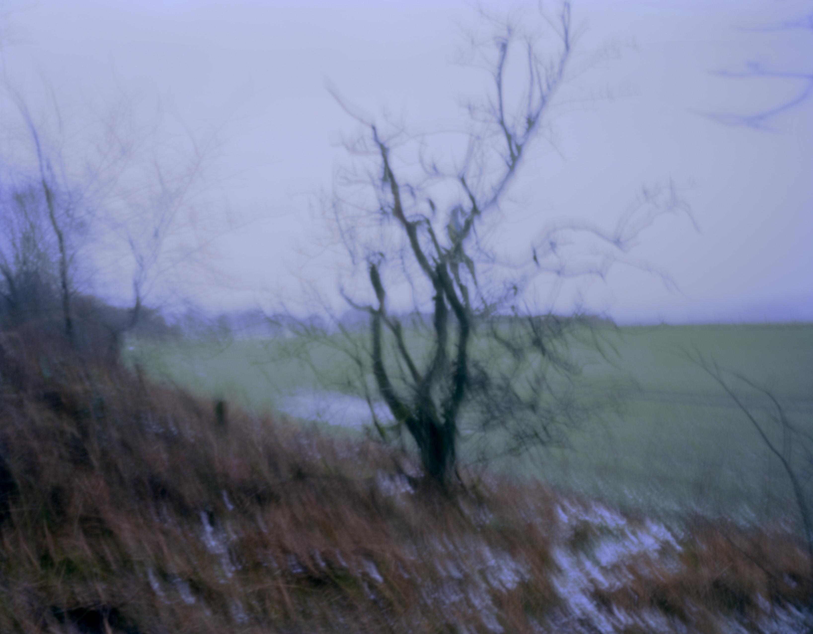 Pinhole photography image of a field with a close up leafless tree. Image by Simon McAuley